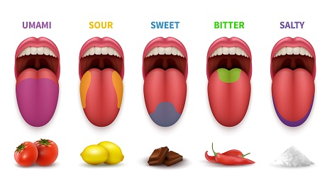 the 5 basic tastes and tongue map